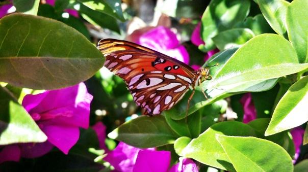 butterfly13