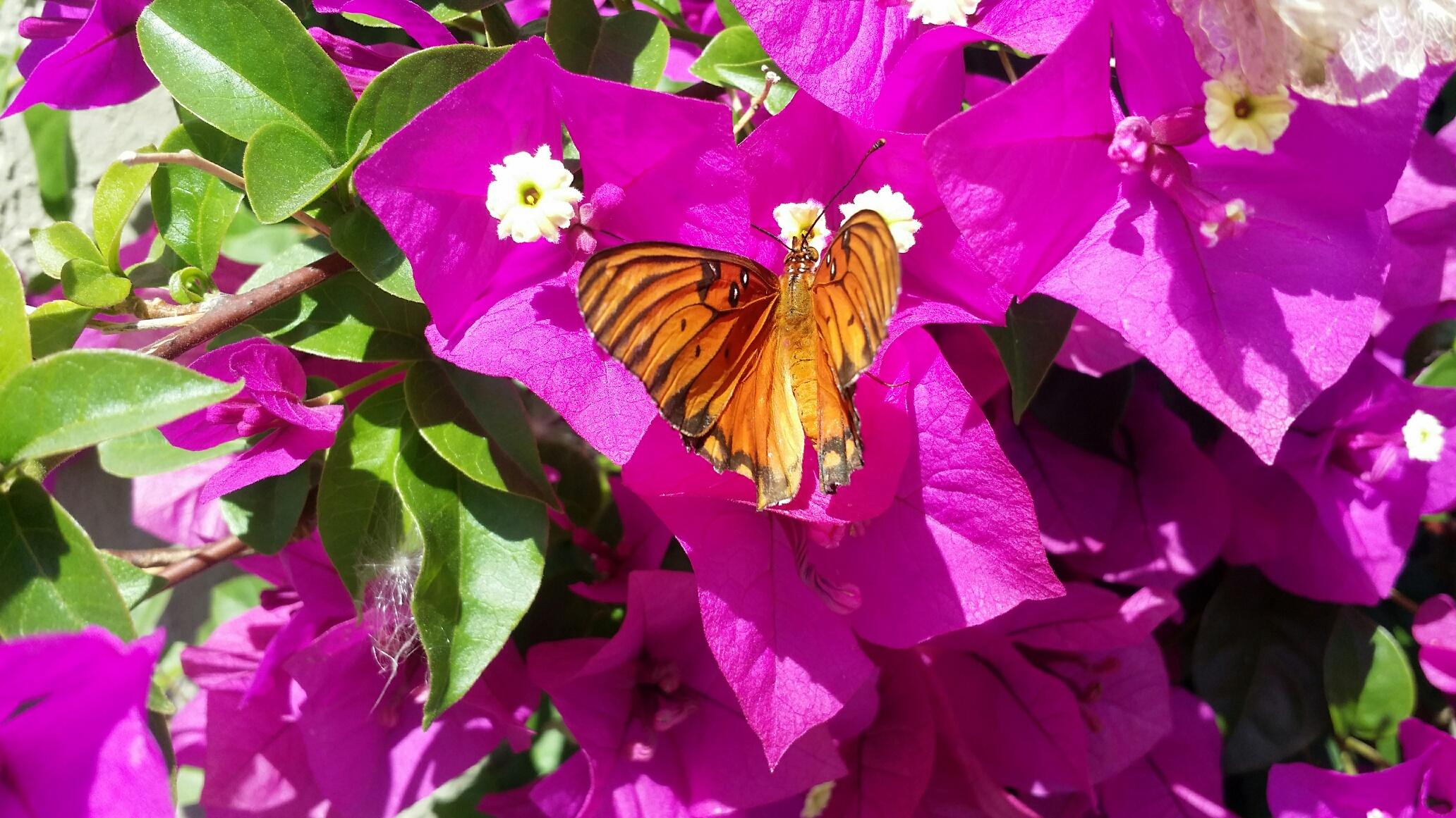 butterfly19