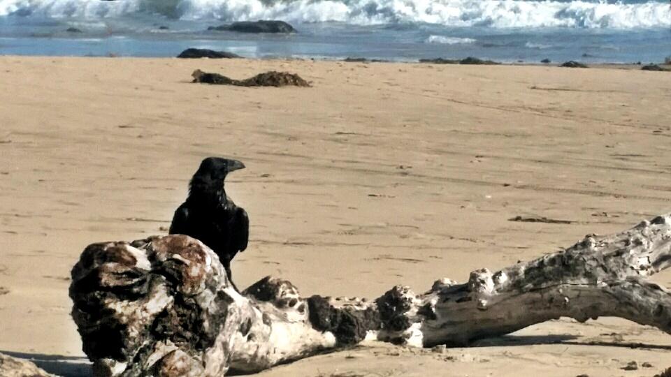 raven beach