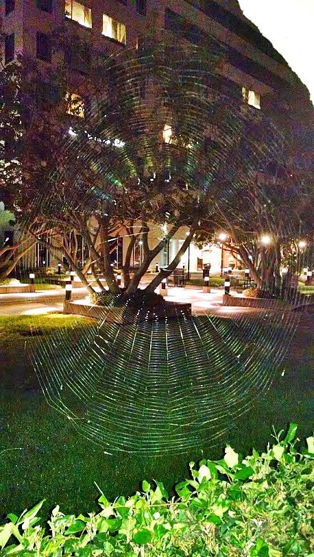 spider web3
