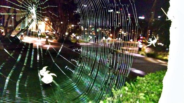 spider web5