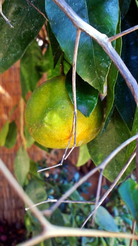 tangerine surprise2