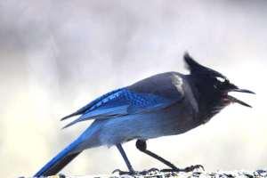bird talk 6
