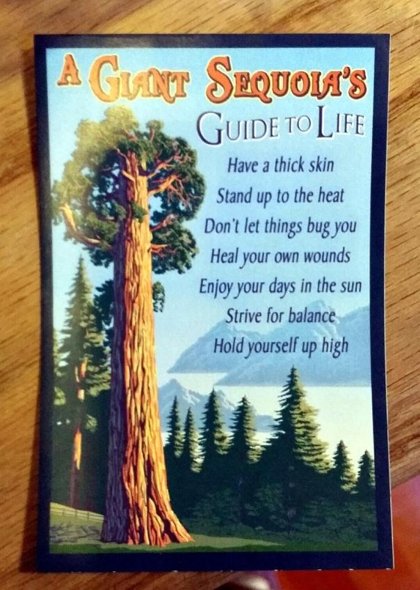sequoia wisdom