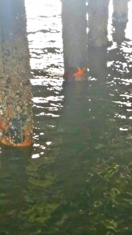 Avila Beach Sealife (1)