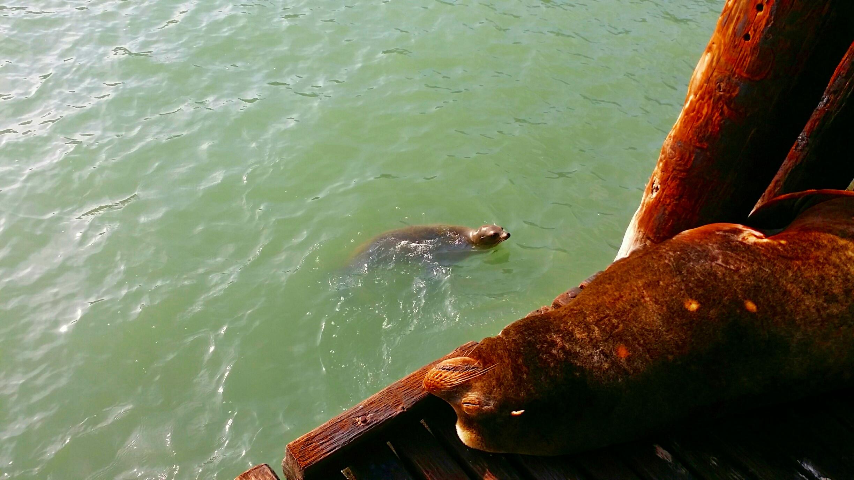 Avila Beach Sealife (10)