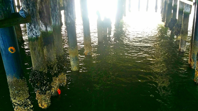 Avila Beach Sealife (13)