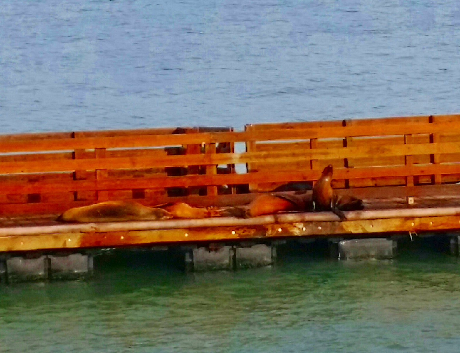 Avila Beach Sealife (16)
