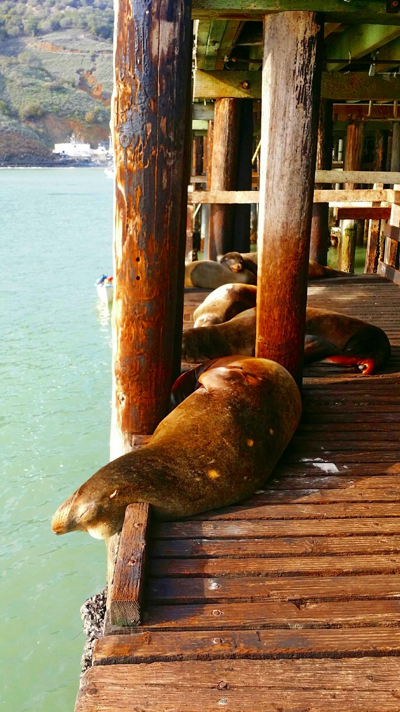 Avila Beach Sealife (18)