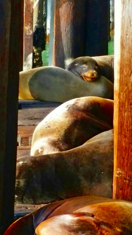 Avila Beach Sealife (19)
