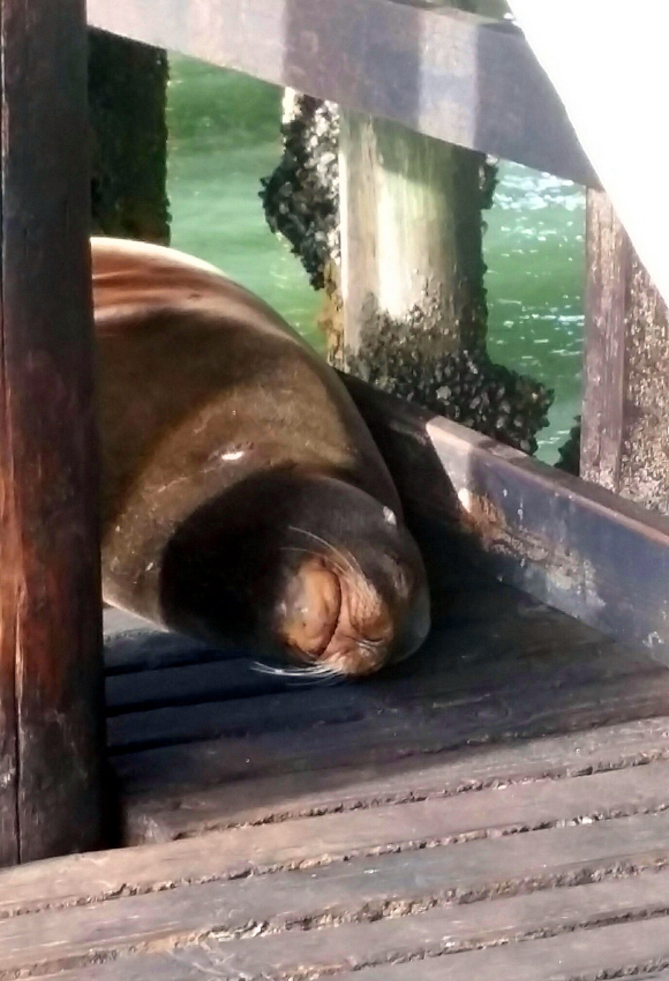 Avila Beach Sealife (24)