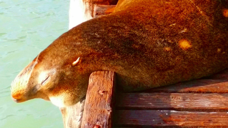 Avila Beach Sealife (25)