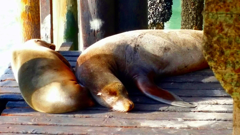 Avila Beach Sealife (28)