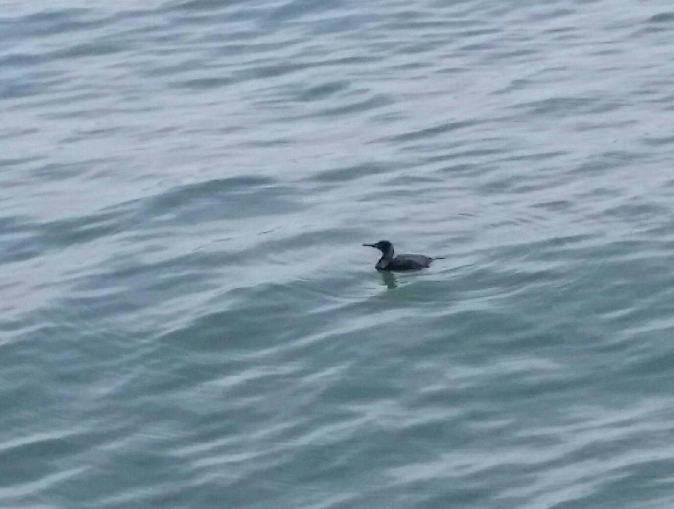 Avila Beach Sealife (7)
