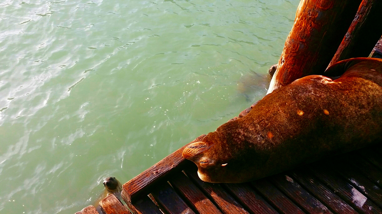 Avila Beach Sealife (9)