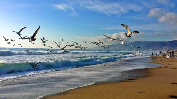 beach freedom (1)