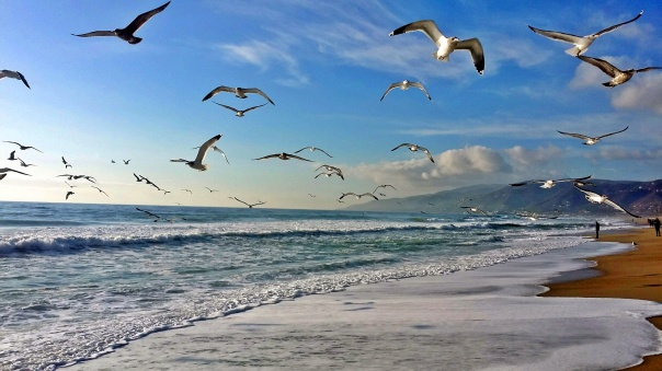 beach freedom (2)