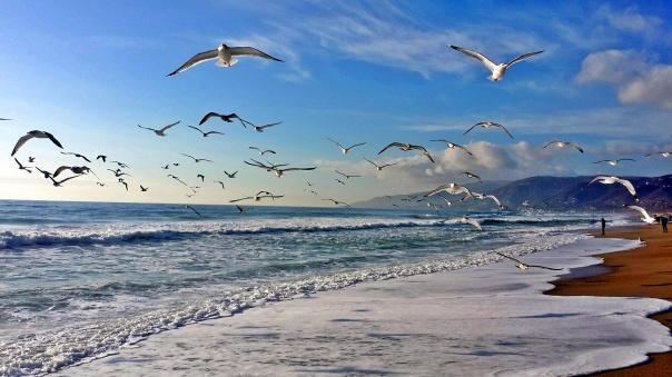 beach freedom (3)