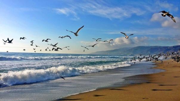 beach freedom (4)