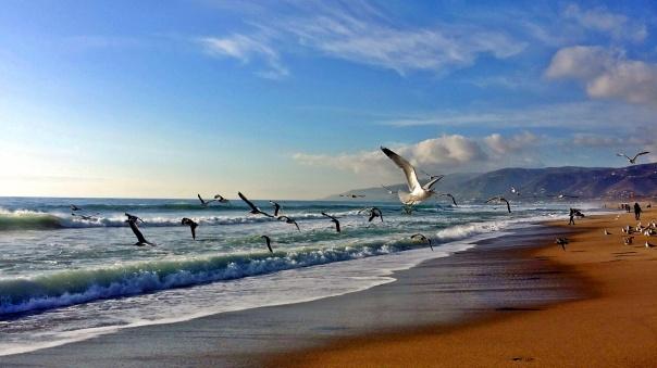 beach freedom (5)