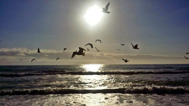 beach freedom (6)