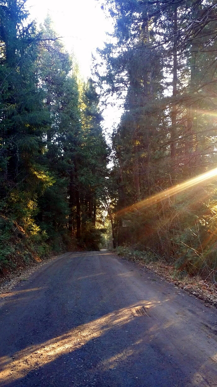 forest light (1)