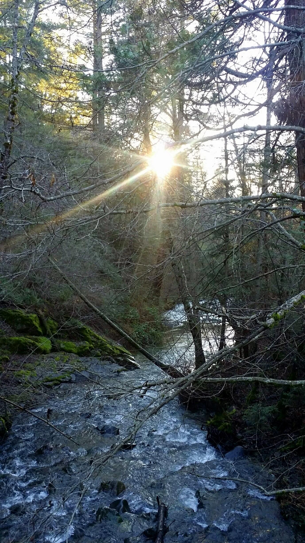 forest light (10)