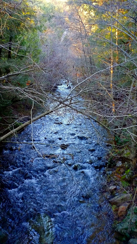 forest light (12).jpg