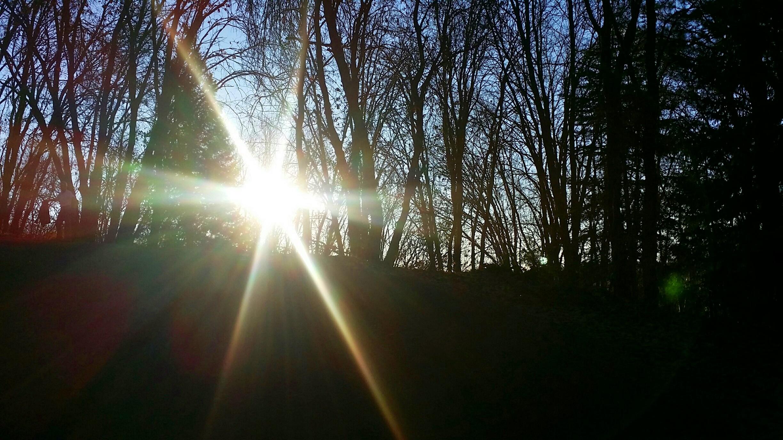 forest light (17).jpg