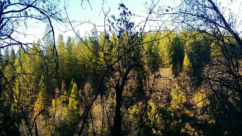 forest light (18)