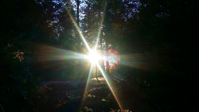 forest light (20)