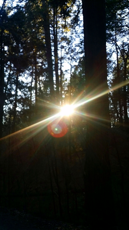 forest light (3)