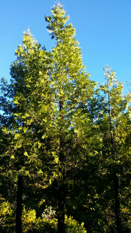 forest light (4)