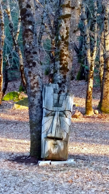 forest light (7)