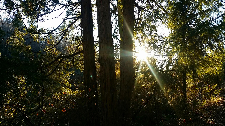forest light (8).jpg