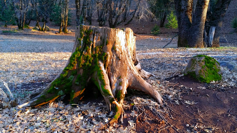 forest light (9).jpg