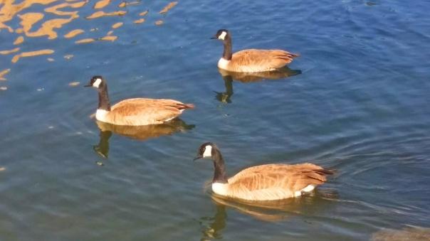 watson lake11.jpg
