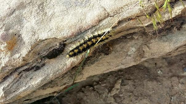 caterpillar2.jpg