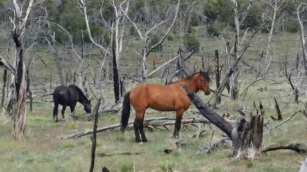 two horses2.jpg