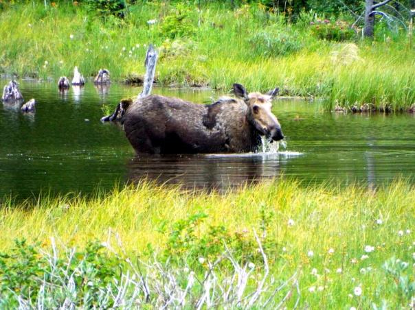 moose13