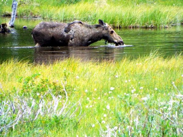 moose17