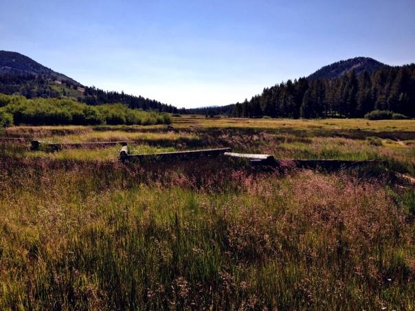tahoe-meadows