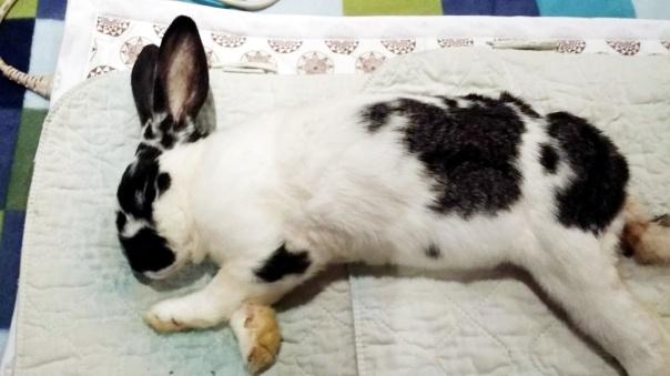 bunny-biomat-1