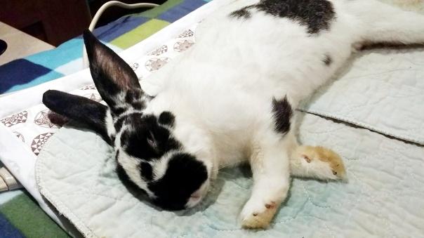 bunny-biomat-2