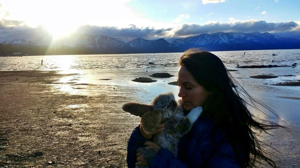 sunset-bunny-1