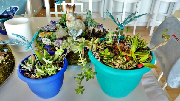 Mini Faery Succulent Gardens (1).jpg