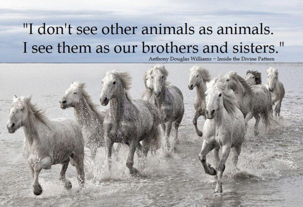 animal brothers and sisters