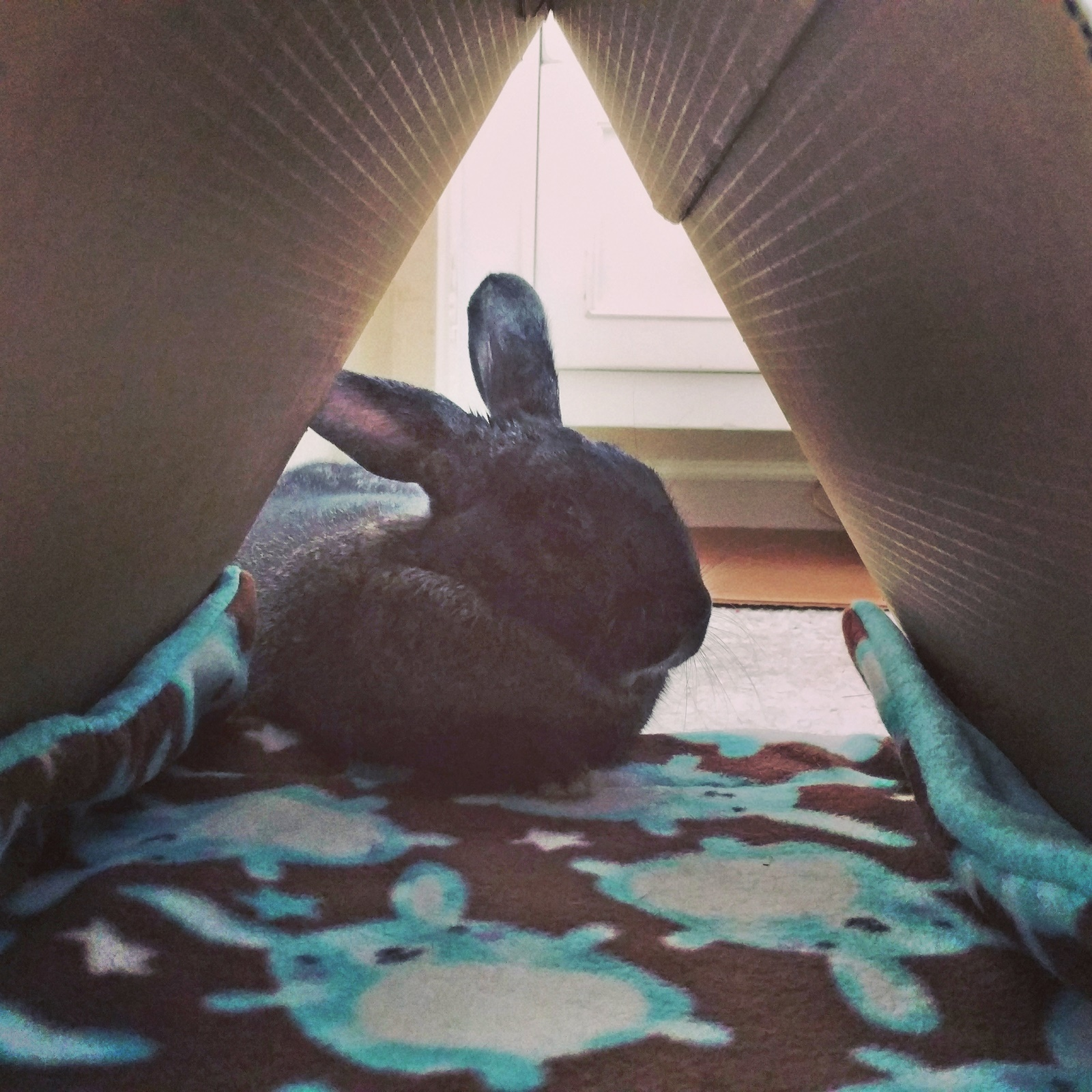 astrid the egyptian bunny.jpg