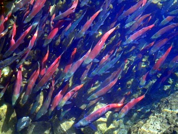 bean salmon (1).jpg