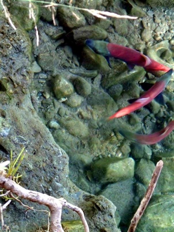 bean salmon (5).jpg